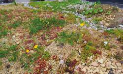 Malmö blir grönare med Biodivercity
